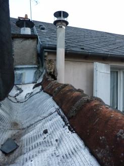 Le chat curieux des voisins